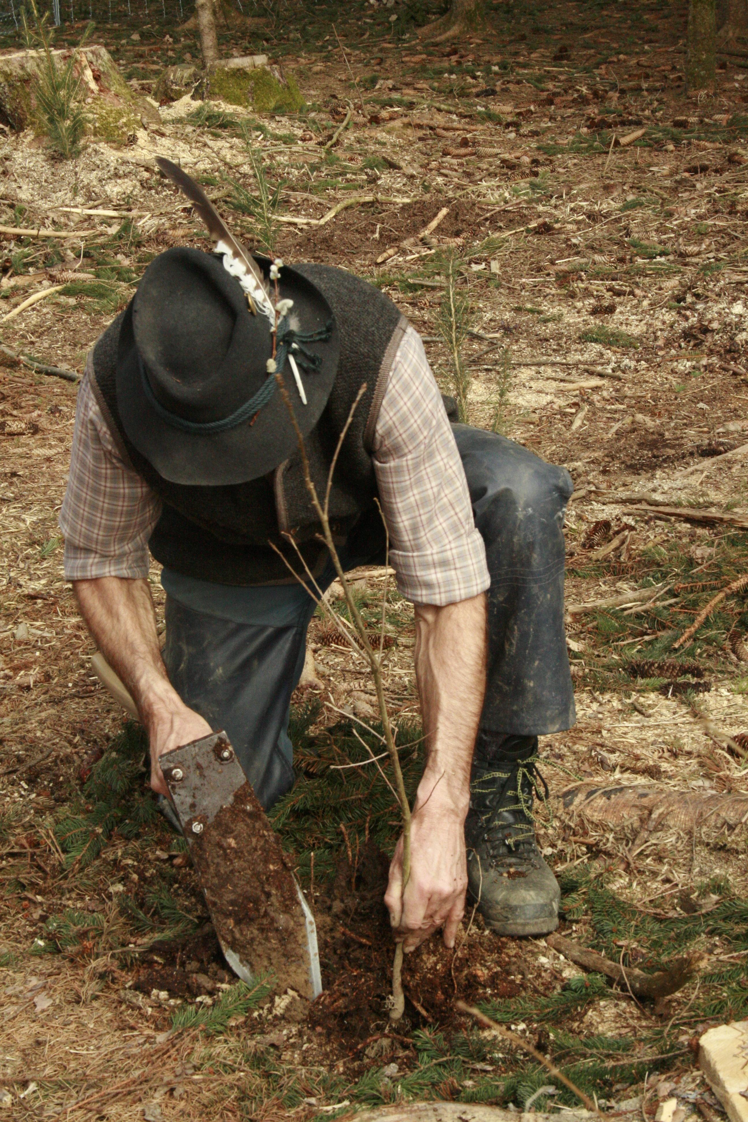 Forstpflanzenaktion 2018